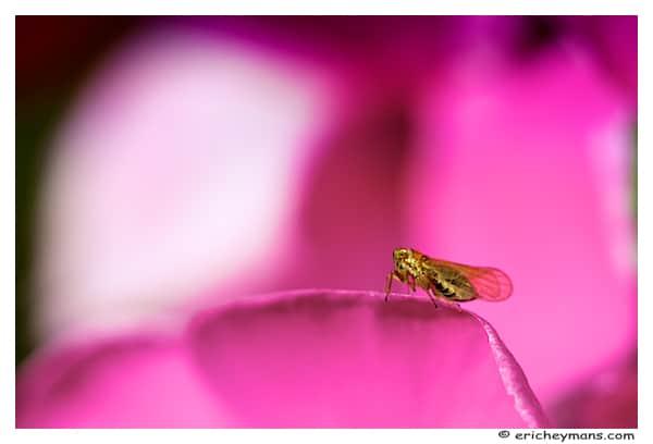 Photographie Macro - insecte minuscule