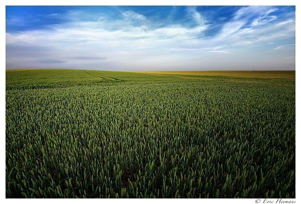 Photographie de Paysage de jour d'un champ de blé dans la région de Nivelles